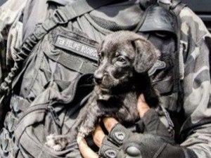 Cão é achado entre drogas apreendidas em comunidade do Complexo da Maré, no Rj