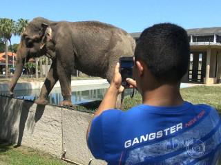 Vistoria encontra irregularidades no zoológico do Rio de Janeiro