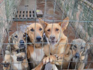Associação que cuida de animais pede ajuda da comunidade em Canoas, RS