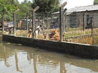 Após cheias, cães de associação de protetores recebem atendimento em Canoas, RS