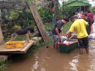 Prefeitura pede ração para os animais resgatados nas ilhas do Guaíba, em Porto Alegre, RS