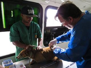 Porto Alegre, RS: Cães comunitários da Praça México são vacinados