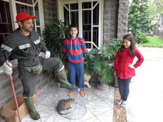 Ratão-do-banhado é resgatado e devolvido à natureza em Serafina Corrêa, RS