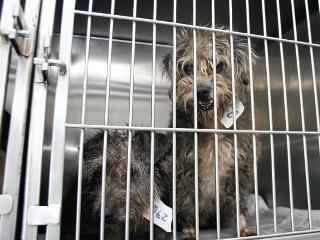 Cerca de 90 animais resgatados nas ilhas já foram castrados em Porto Alegre, RS