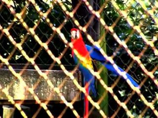 Polícia Civil apura desaparecimento de animais no zoológico de Sapucaia do Sul, no RS