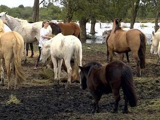 Abandono de 100 cavalos em terreno mobiliza população de Pelotas, no RS