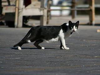 Mulher flagra carro atropelando gato em Caçador, SC