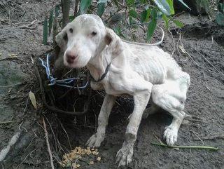 PM atende ocorrência de maus-tratos e recolhe cão desnutrido em Itapema, SC