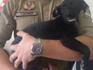 Cego e com marcas de maus-tratos, cão é resgatado de casa de suspeito em Porto União, SC