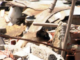 Reintegração deixa centenas de cães e gatos abandonados em Santo André, SP