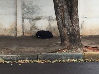 Cadela fica em frente ao bar onde tutor morreu em Araçatuba, SP