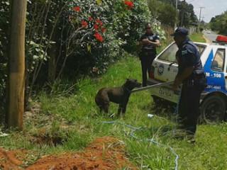 Após dois dias em buraco, cão é salvo por guardas em Araçoiaba da Serra, SP