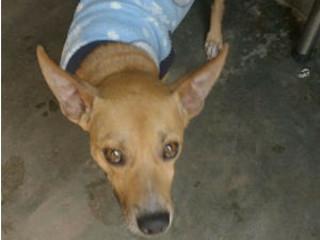 Cachorro com história especial espera por adoção em Bauru, SP