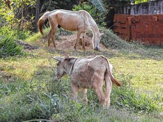 Cavalos são levados do Centro de Controle de Zoonoses em Bauru, SP
