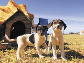 Programa municipal diminui número de castração de animais em Franca, SP