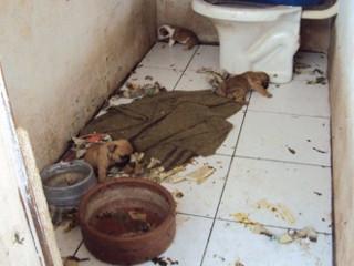 Justiça nega liminar de devolução de cães a veterinário presidente de ONG em Guararapes, SP