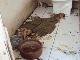 Vice-presidente de ONG de proteção a animais é multado por maus-tratos