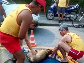 Bombeiros resgatam cadela grávida após ela ser atropelada em Guarujá, SP