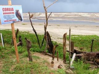 Morador cria reserva no meio da praia para salvar animais e local vira atração