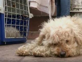 Clínica veterinária ilegal é fechada com animais em meio à sujeira