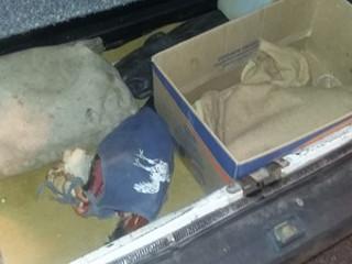 Três são detidos com quatro galos de rinha na Via Dutra, em Jacareí, SP