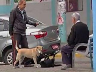 SP: Poá e Suzano estudam liberação de animais nos transportes coletivos