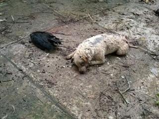 Cães e urubus aparecem mortos e caso intriga moradores de Peruíbe, SP