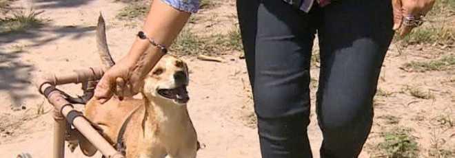 Voluntário faz cadeiras de rodas para doar para cães deficientes