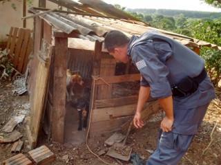 Polícia resgata cães sem água e comida em distrito de Pirajuí, SP
