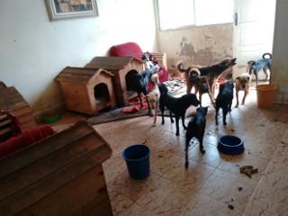 Cães abandonados em residência são resgatados em Praia Grande, SP