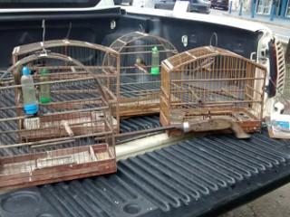 Aves e arma são apreendidas pela Polícia Ambiental em Suzano, SP