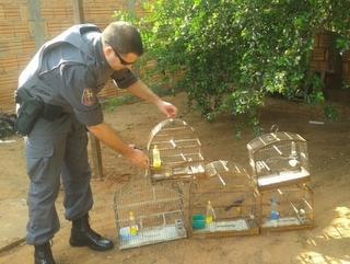 Policia Ambiental resgata 20 aves silvestres em cativeiro e aplica multa de R$ 17,5 mil
