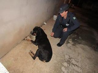 SP: Guarda Civil Municipal de Valinhos detém motorista por maus-tratos a animal