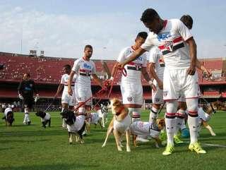Cachorrada em campo! Botafogo quer reproduzir iniciativa do São Paulo