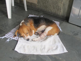Câmara de SP aprova 'Samu Veterinário' para cães e gatos