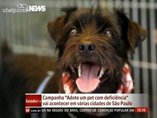 Campanha incentiva adoção de animais com deficiência em São Paulo