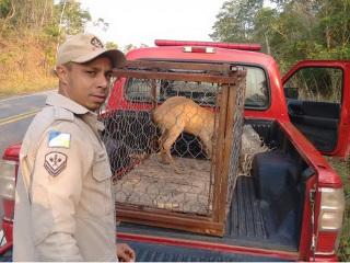 Animais silvestres são capturados em áreas urbanas de Palmas e Gurupi, TO