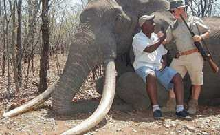 Caçador alemão mata o maior elefante do Zimbábue