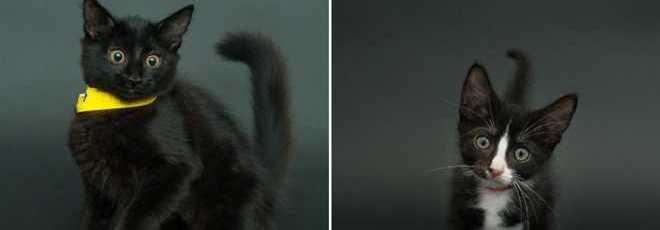 Fotógrafo capta gatinhos pretos porque eles são sempre os últimos a serem adotados