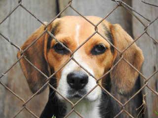 Juiz argentino declara que animais não são objetos, nega devolução à tutora por maus-tratos e determina doação de cães