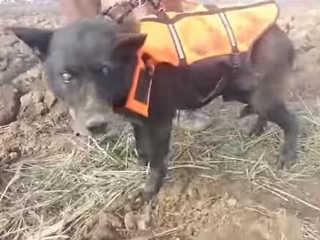 Bosnia cachorro preso resgatado H
