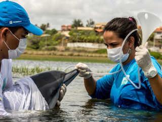 CE golfinho resgatado H