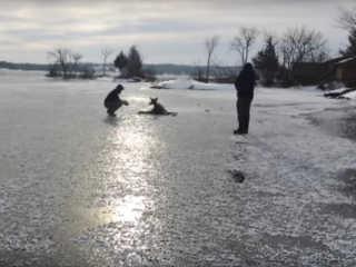 Cervo lago congelado resgatado H