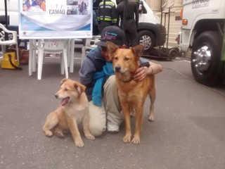Colombia lei protecao animais H