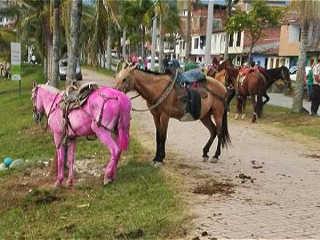 Colômbia: Prefeitura de Guatapé responde por caso de maus-tratos a cavalos