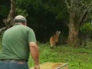 DF Brasilia reabilitacao animais H