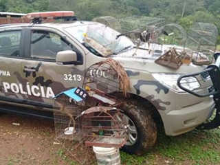 Homem é preso por manter animais silvestres em cativeiro, em Paranoá, DF
