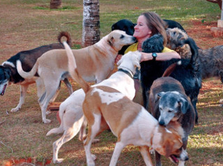 Voluntária do DF cria, em casa, 39 cachorros vítimas de maus-tratos