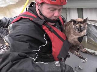 EUA Missouri gato sobrevive caixa flutuar H