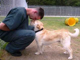Presos adestram cães que seriam sacrificados por comportamento violento nos EUA